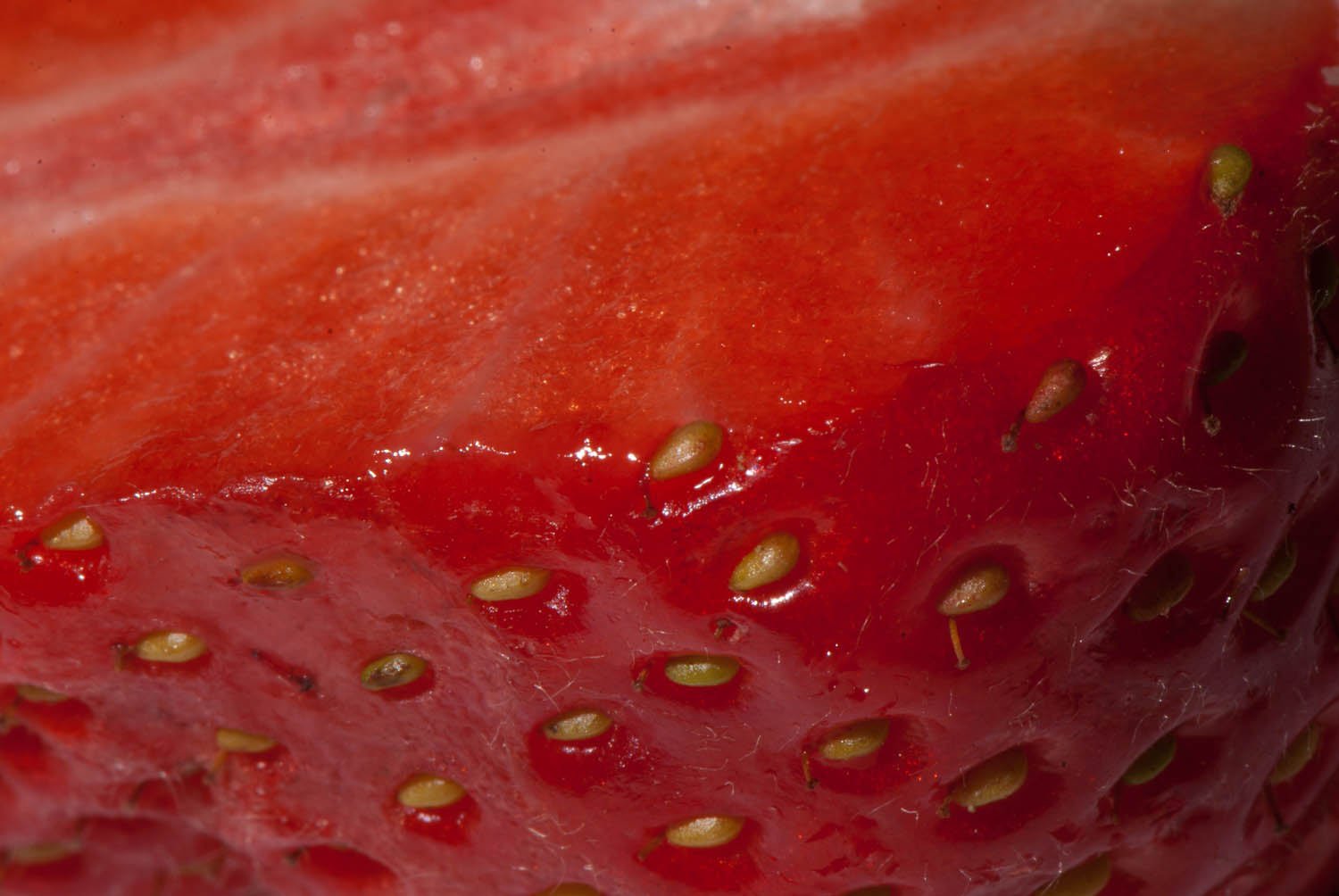 Strawberry Macro Edge