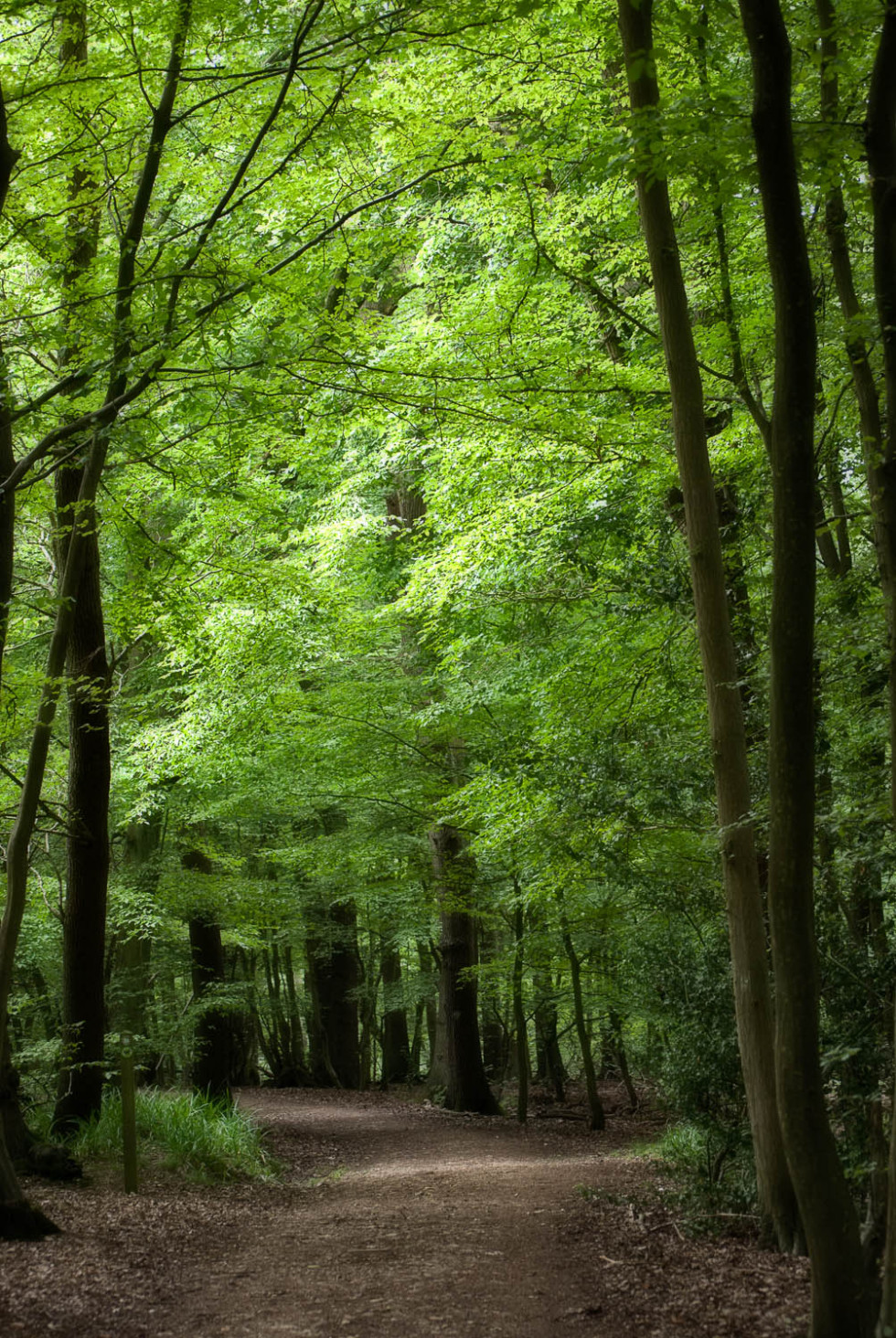 Dreamy Broxbourne Woods