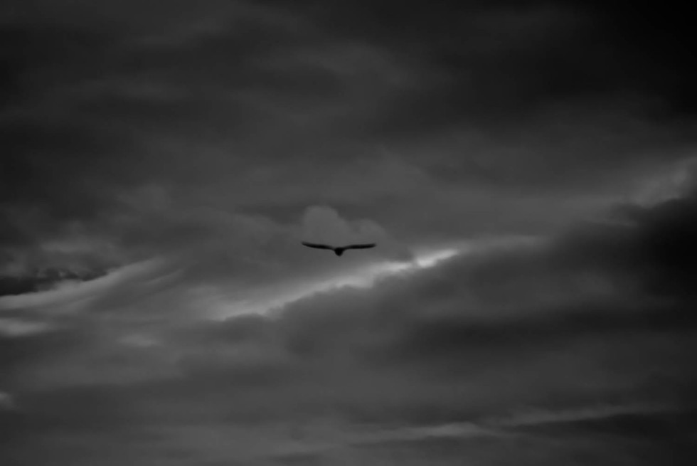Flying Home B&W