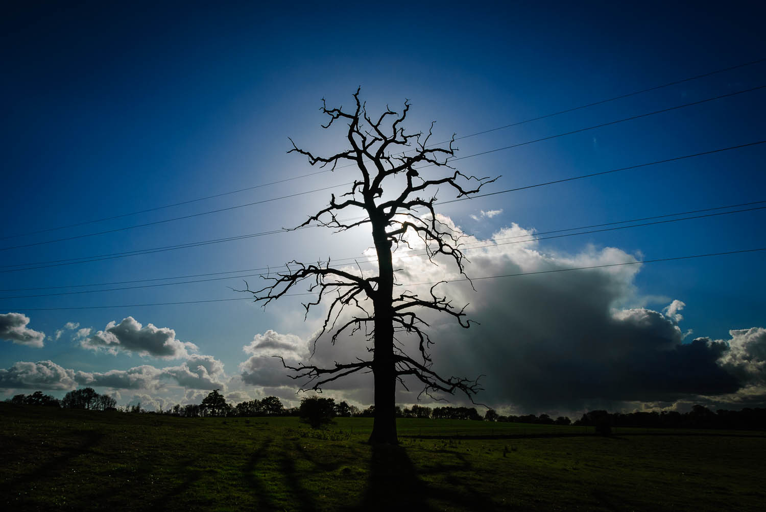 Electrified Tree Silhouette