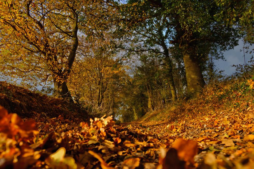 Autumn in Rickling Green