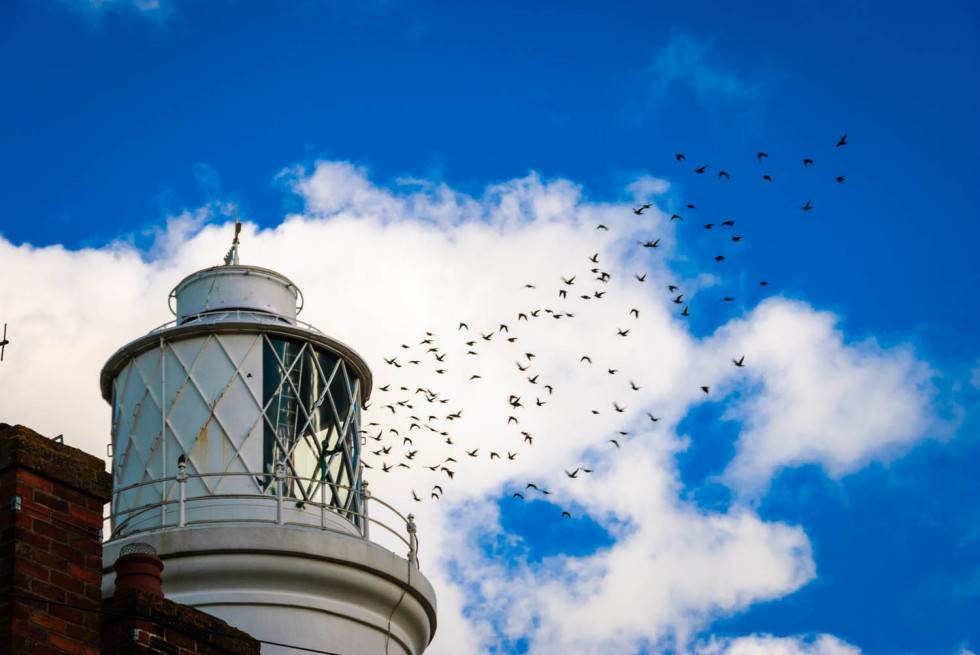 Southwold Lighthouse and the Starlings