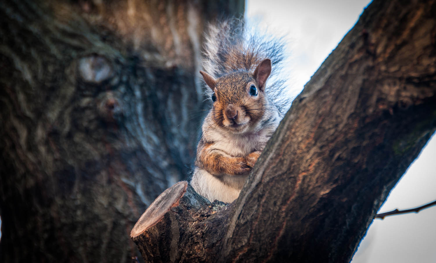 Squirrel of City Hall 2