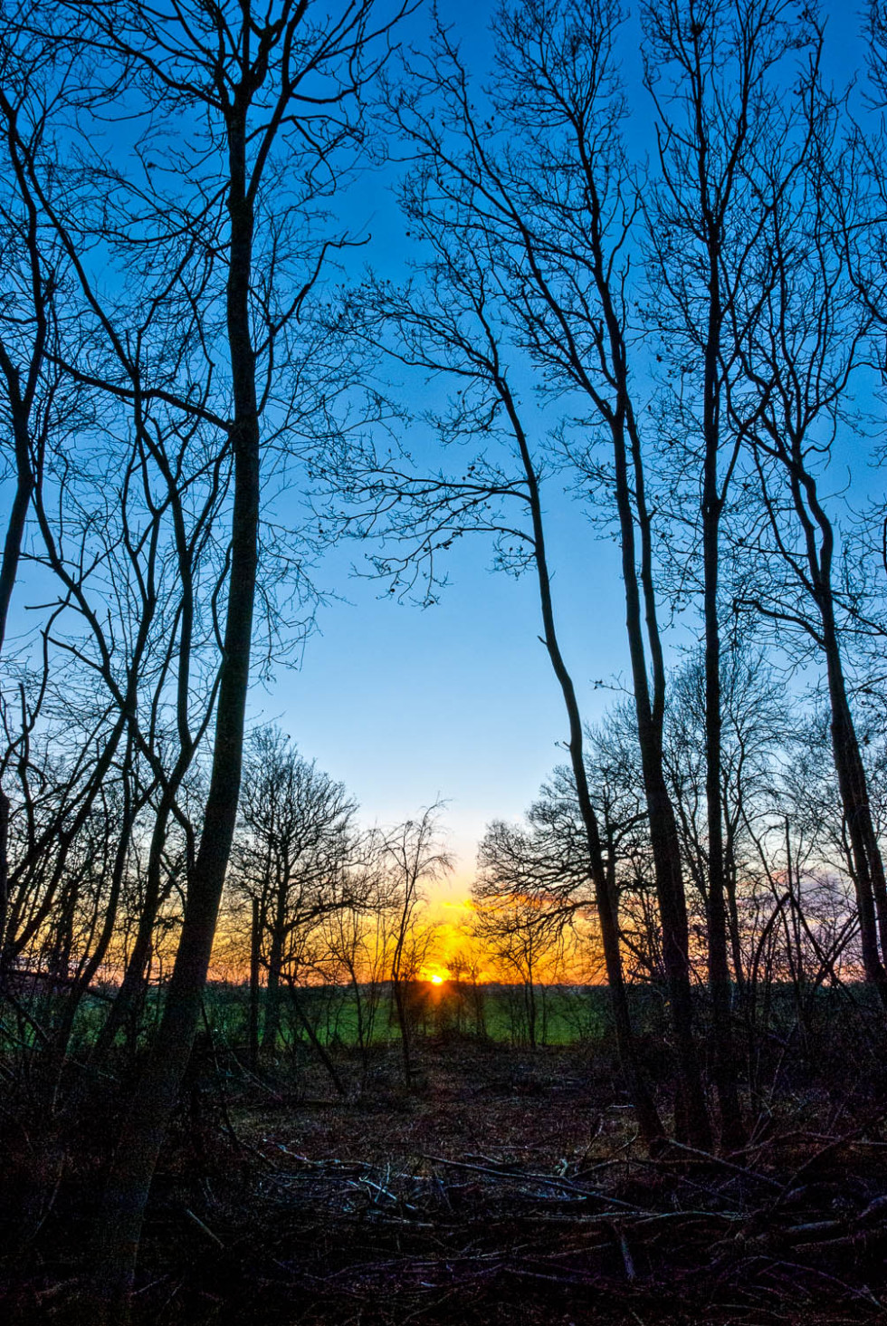 Rowney Woods Sunset
