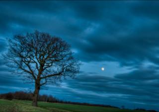 Berners Roding Moon Rise