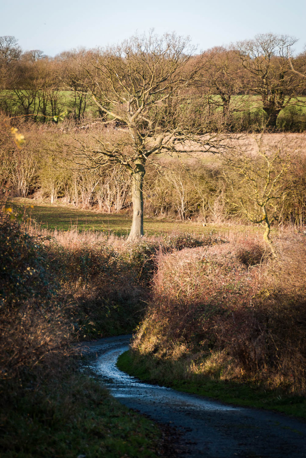 Bush Road, Great Sampford, Essex