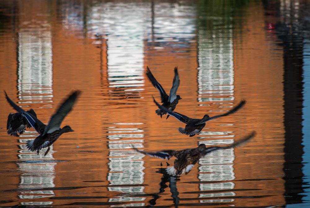Reflected Landings