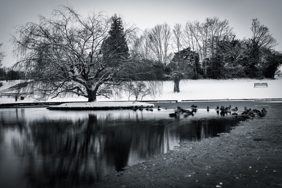 A Frozen Doctors Pond