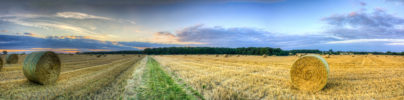 A panorama of some recently harvested fields behind Rowney Woods in Essex