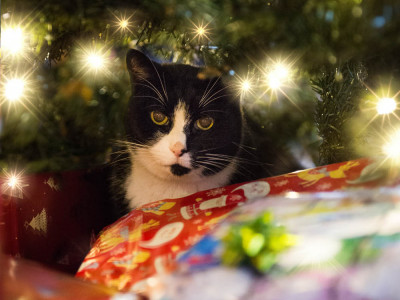 Under the Christmas Tree