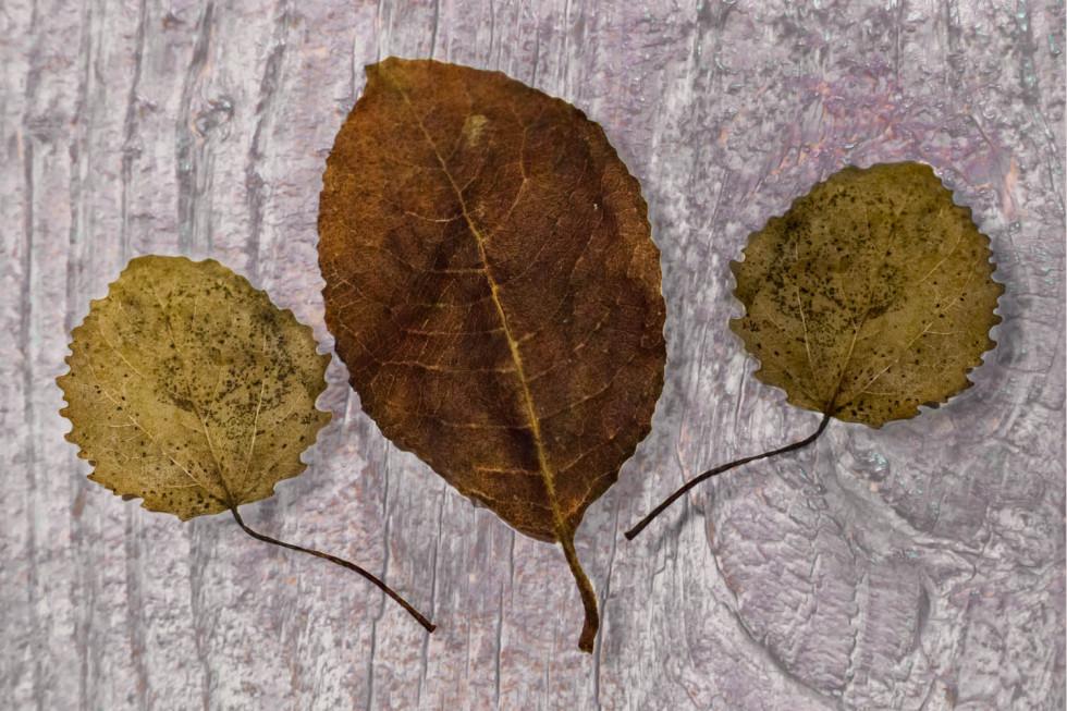 018/365v2 3 Leaves