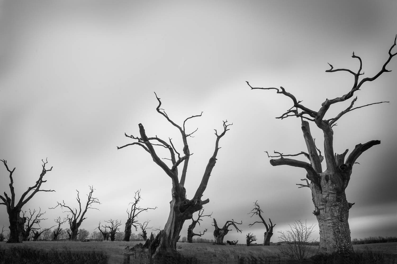The Dead Trees of Mundun Essex, Black and White