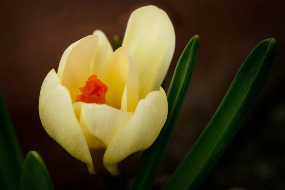 065/365v2 Unfurling Spring