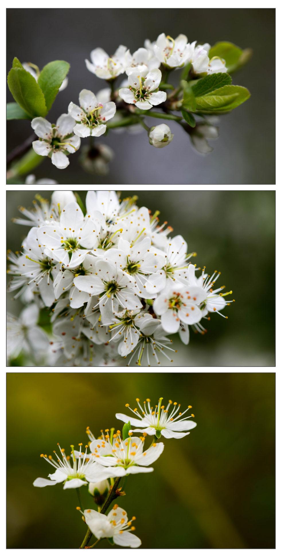 A Riot of Blossom