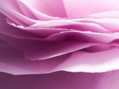 093/365v2 Paper Petals