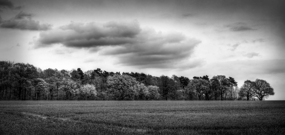 Rowney Woods in Black and White