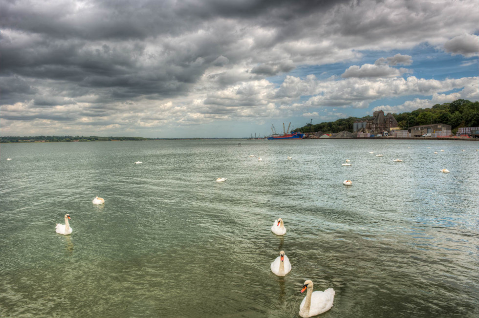 The Swans of Mistley