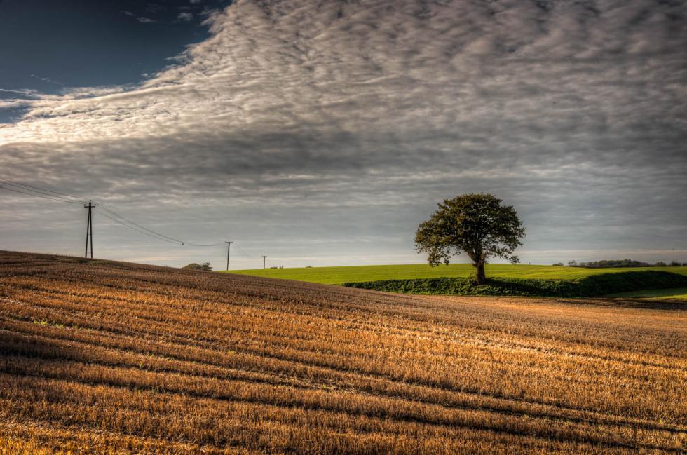 310/365v2 Curvacious Landscapes