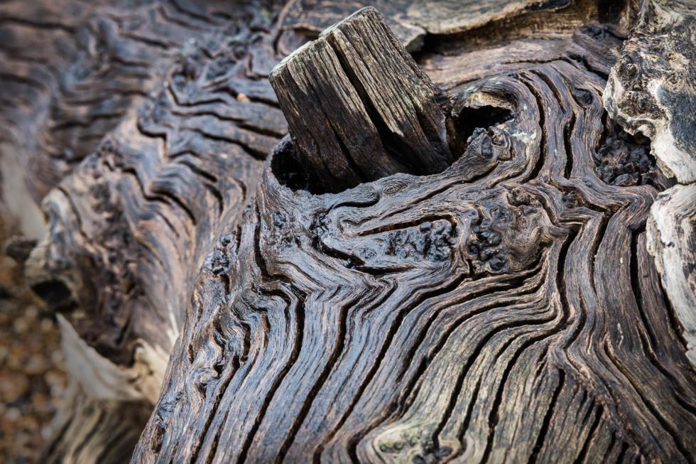 317/365v2 Driftwood II