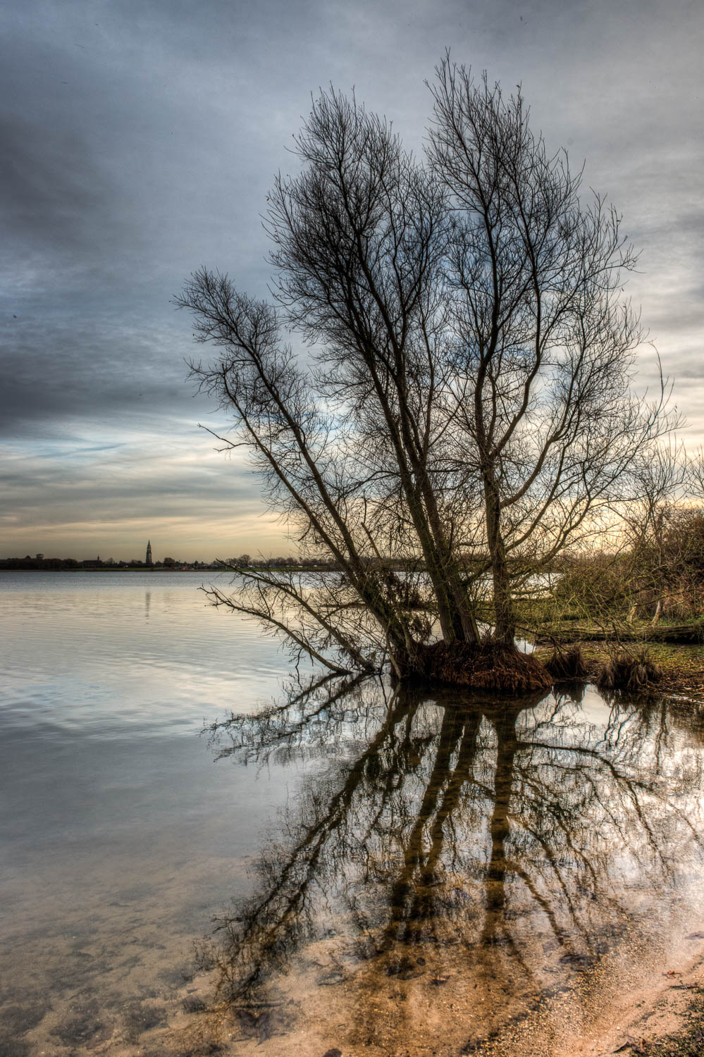 Alton Water Tree and Reflection