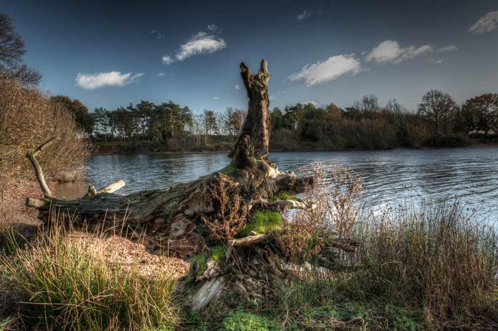 341/365v2 Fallen Tree at Alton Water