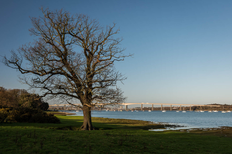The Orwell Bridge, River and Tree