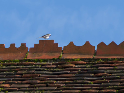 332/365v2 – Up On The Roof