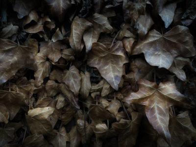 05/365v3 Autumnal Leaves
