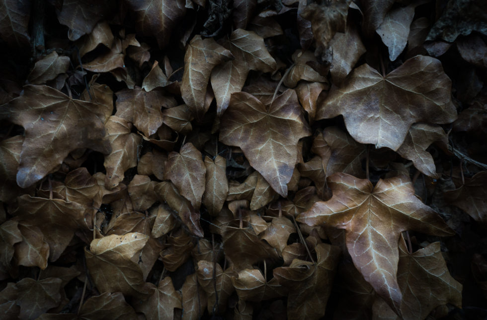 05/365v3 Autumnal Leaves