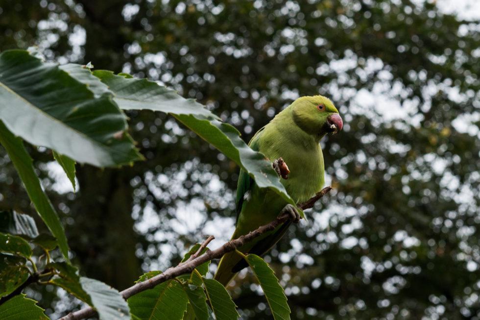 17/365v3 Just a Bird