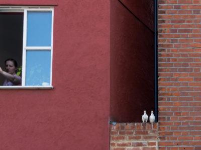 07/365v3 Two Birds, One Stone