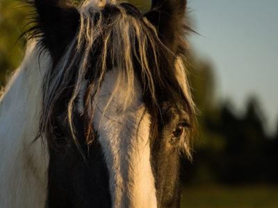 33/365v3 Hey Horse, why the long face?