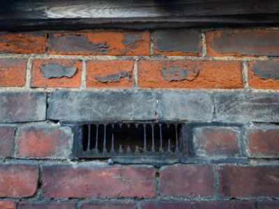 35/365v3 This Wall Bites