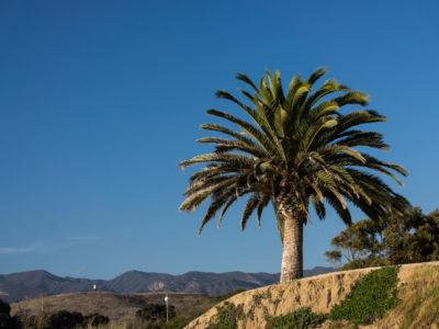 A Californian Landscape