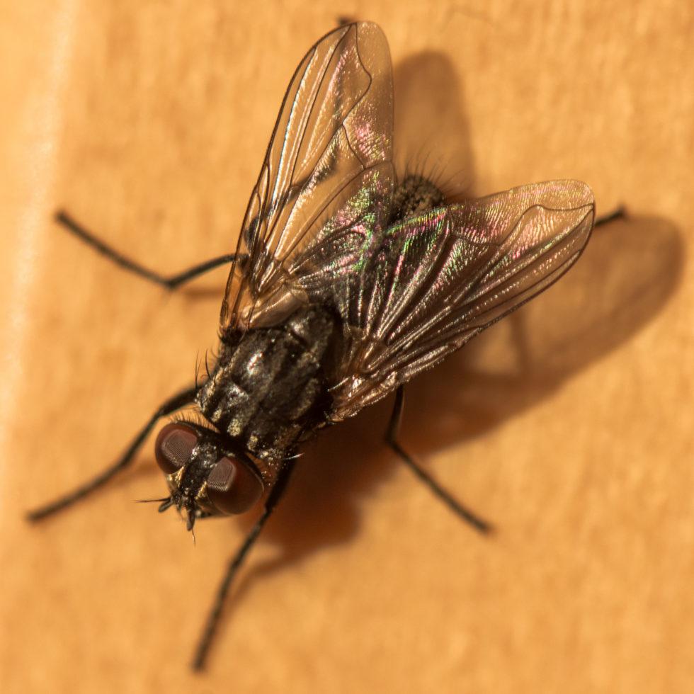 59-365v3-the-fly