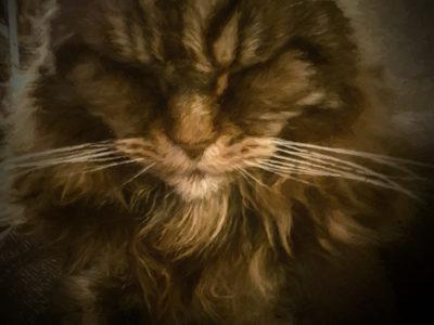 93/365v3 Sleepy Grumpy Cat