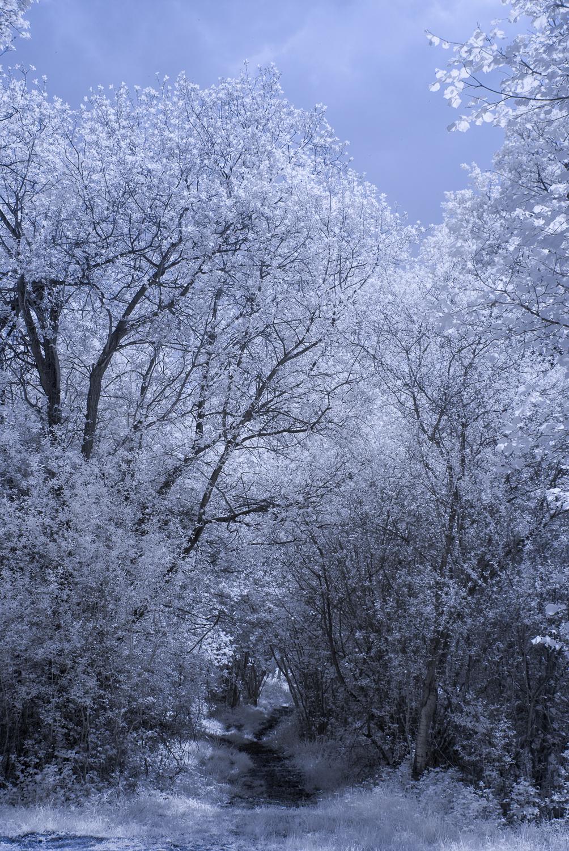 Rowney Woods IR 5