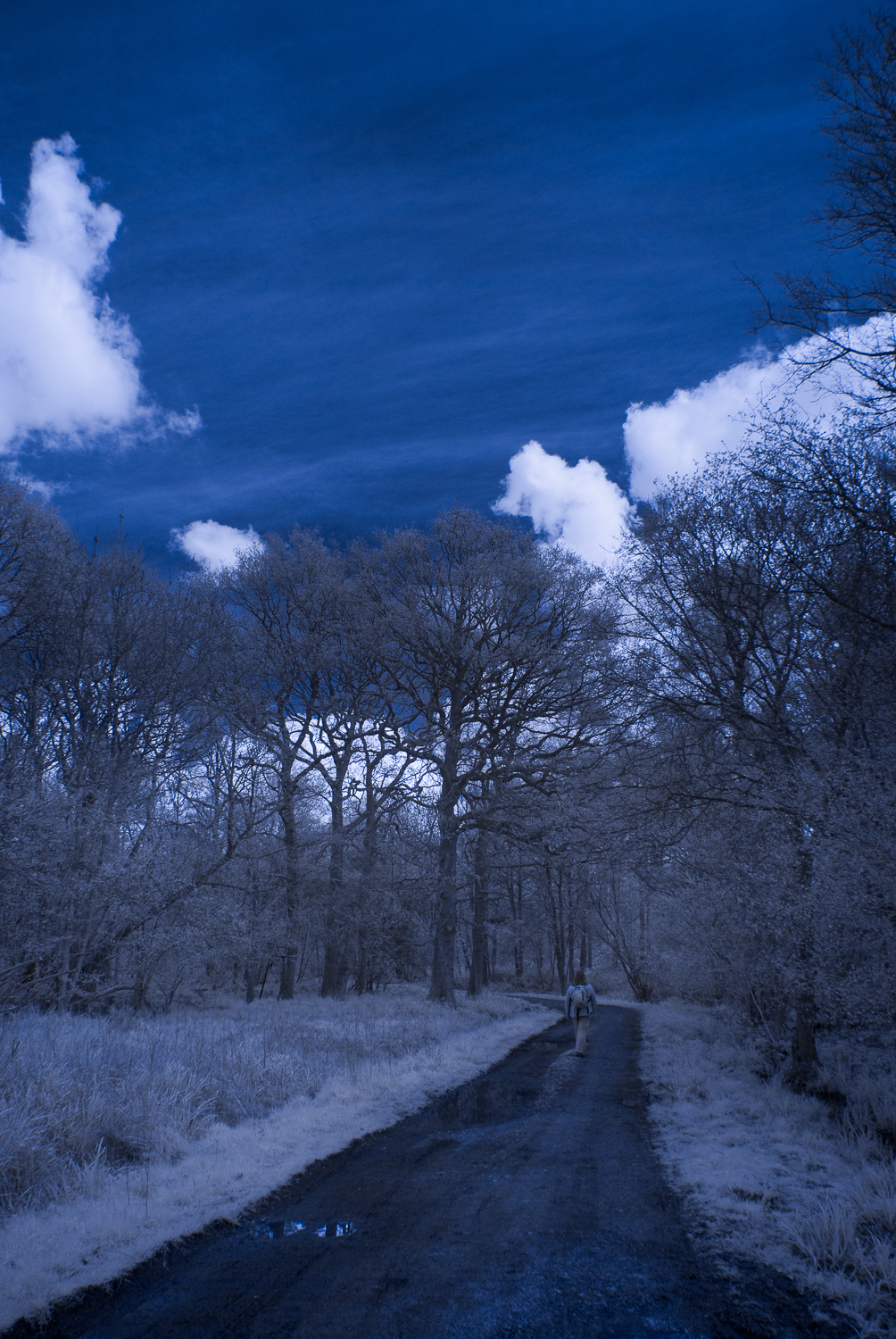 Walking In Rowney Woods IR
