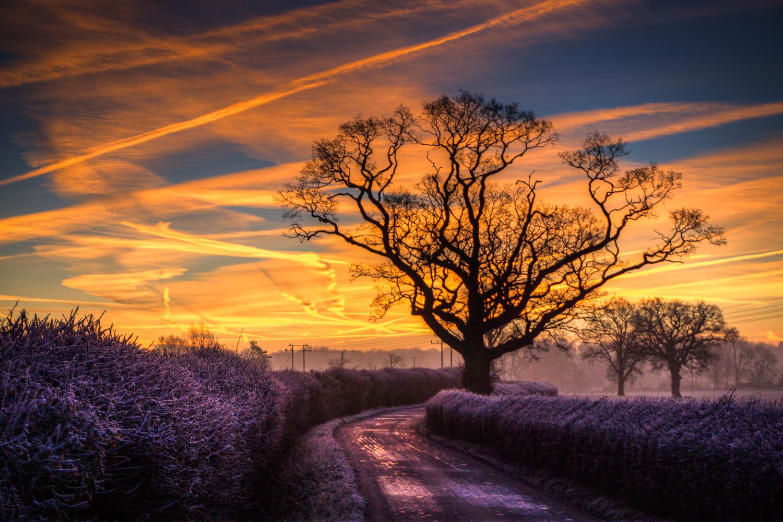 Sunrise at my usual morning tree
