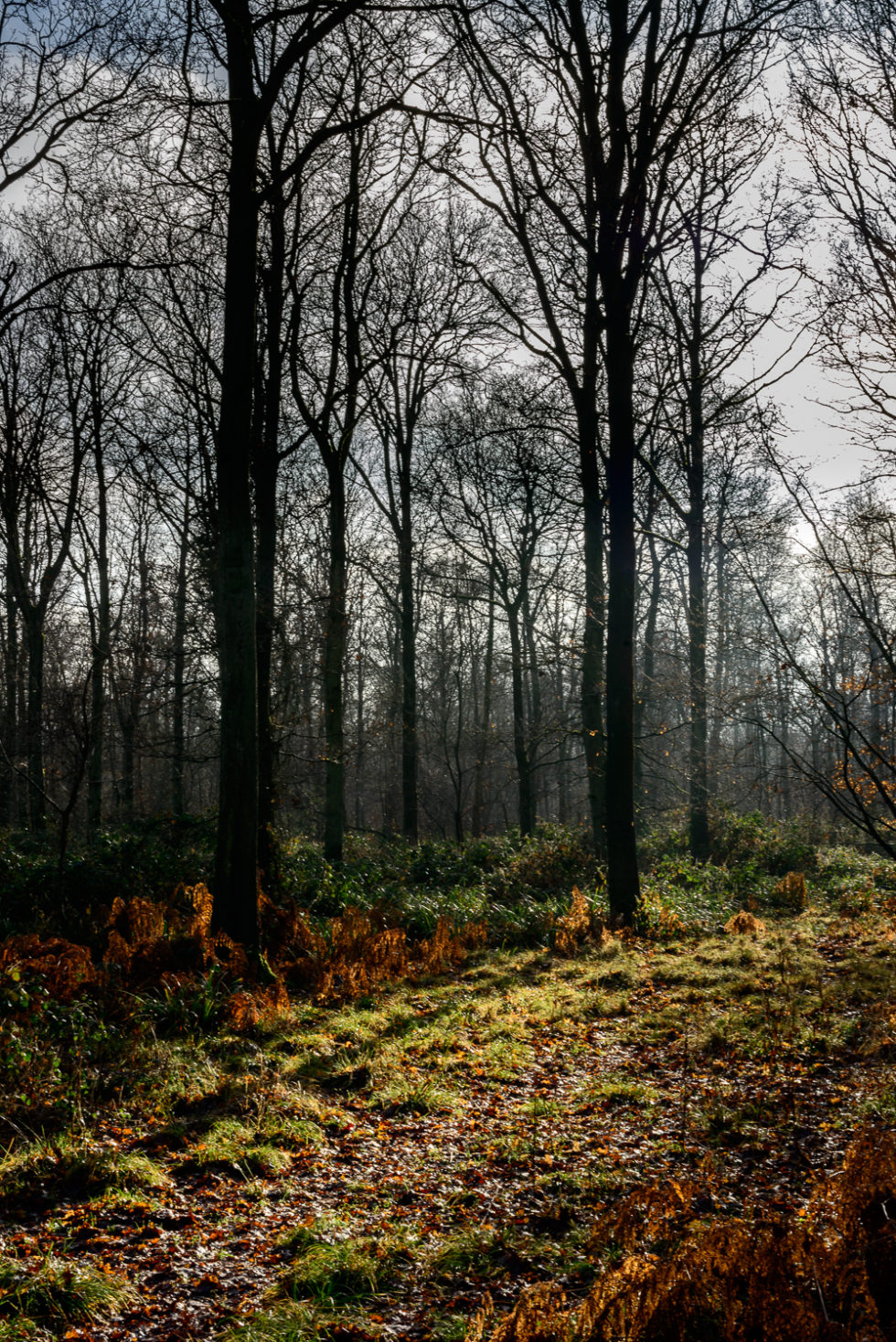 130/365v3 – Woodland Light.