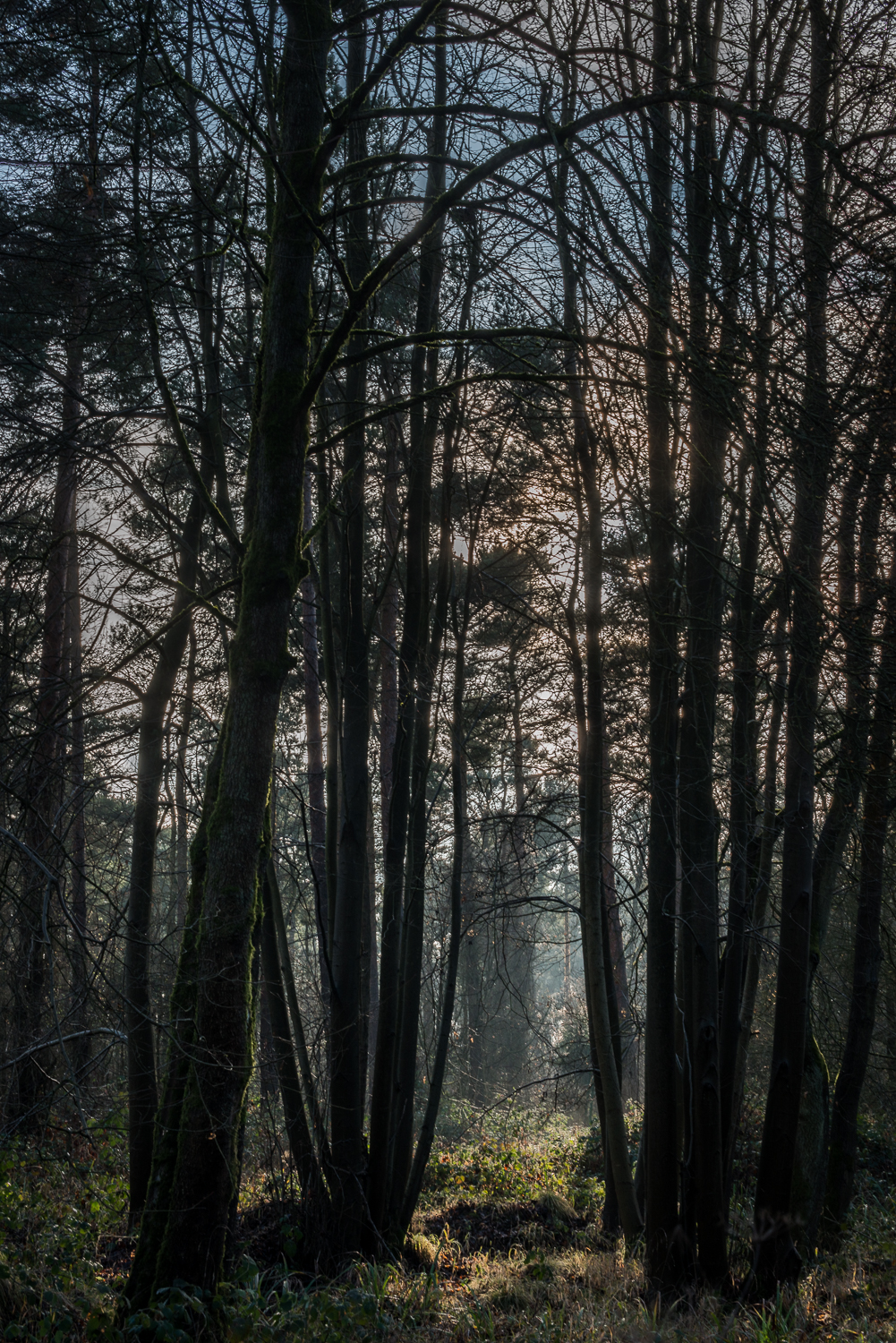 Woodland Light 2