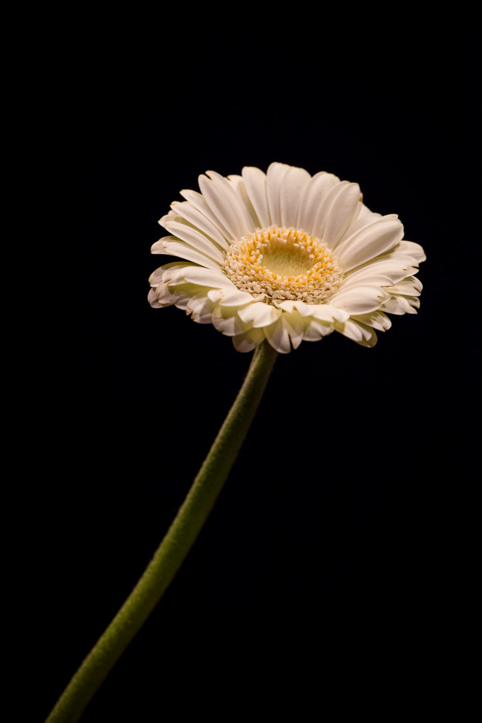 186/365v3 Just a Flower