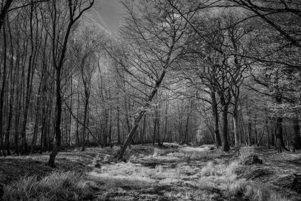 207/365v3 Broxbourne Woods