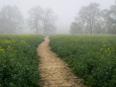 215/365v3 Into the Mist…a path well travelled