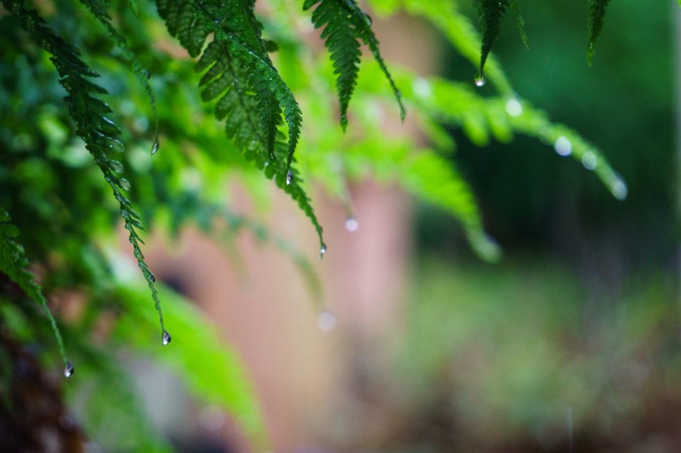 258/365v3 – It's Raining…