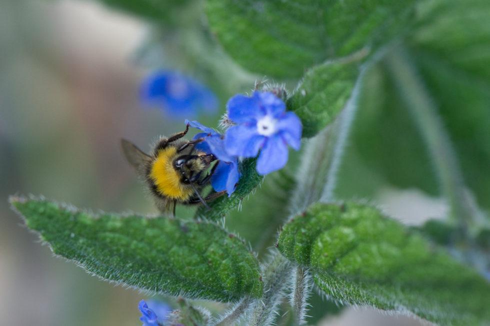 263-365v3 - Busy Bee