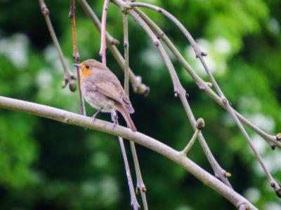 250/365v3 – Robin