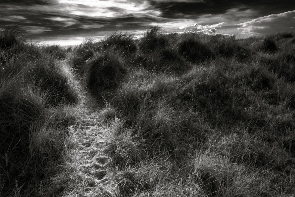 273/365v3 – Path Through The Dunes