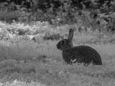 279/365v3 Infra-Red Bunny