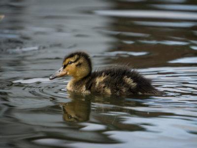 302-365v3 – Chicks